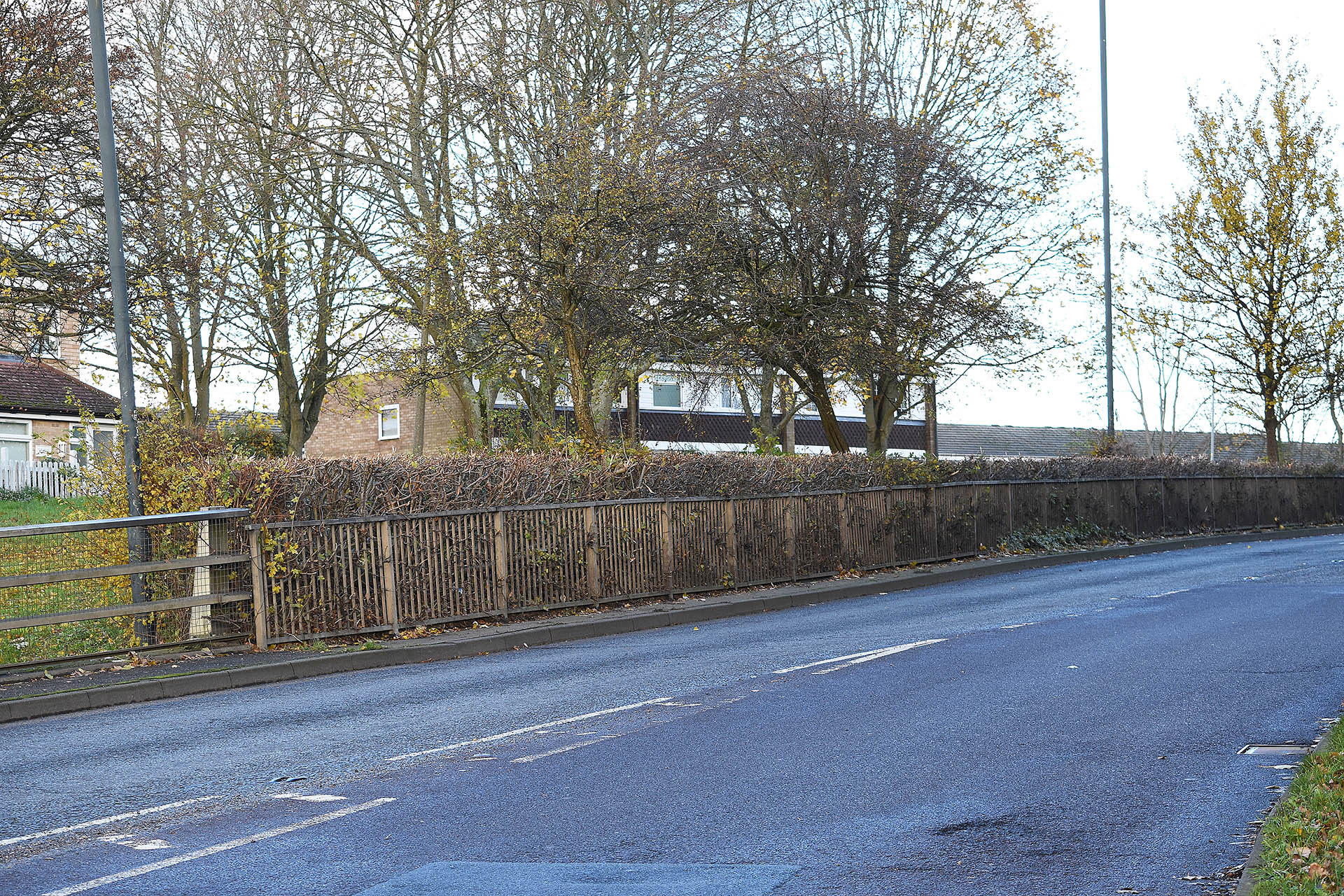 Hedge row between Crawley Drive and Link Road